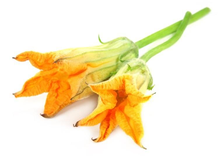 fiore-di-zucca