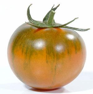 pomodoro-camone
